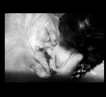 Sleeping Ferrets by Fennic
