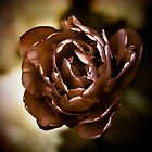 Sepia Flower, Face On by Kollaps-PQ