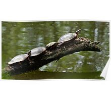 Painted Turtles Poster
