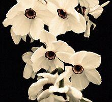 Muted Daffodils by Darren Allen
