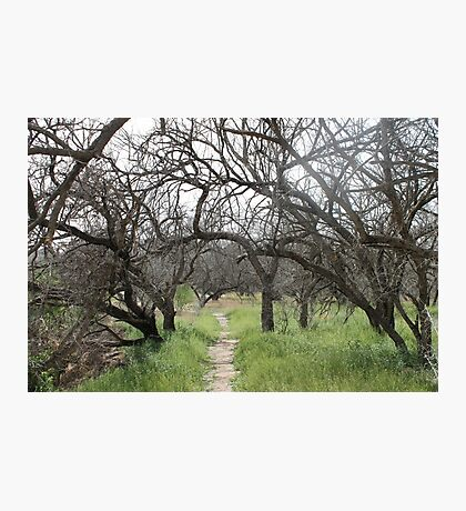 Tree Path Photographic Print