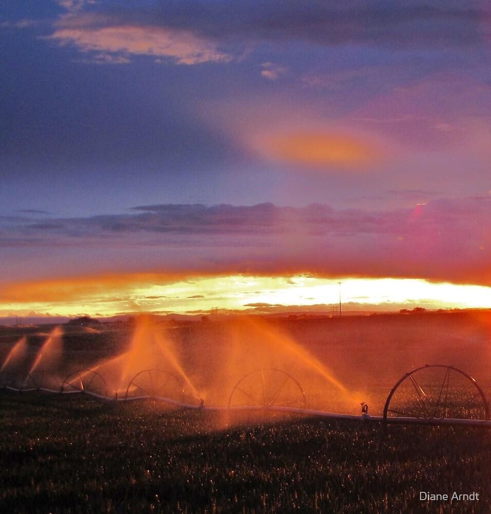 Sunset and Sprinklers by Diane Arndt