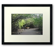 Bench & Tree Arches  Framed Print