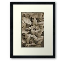Softly in Sepia Framed Print