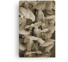 Softly in Sepia Canvas Print