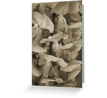 Softly in Sepia Greeting Card
