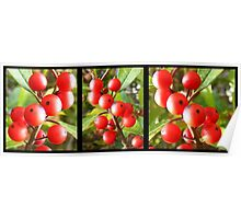 Berry Triptych Poster