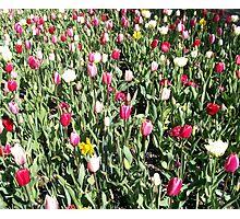 Flowers 0636 Photographic Print