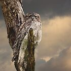 Silently Watchful Nightjar by byronbackyard