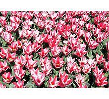 Flowers 0657 Photographic Print