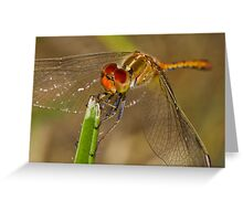 Tau Emerald Dragonfly Greeting Card