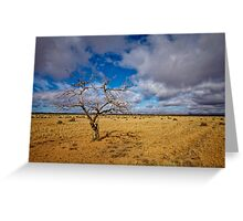 Lonely Tree - Steinfeld, South Australia Greeting Card