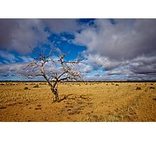 Lonely Tree - Steinfeld, South Australia Photographic Print