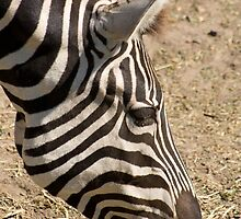 Stripes by Jennifer Saville