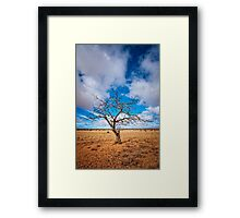 Lonely Tree at Steinfeld - South Australia Framed Print