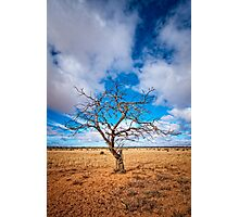 Lonely Tree at Steinfeld - South Australia Photographic Print