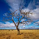 Portrait of a Tree - Steinfeld, South Australia by AllshotsImaging