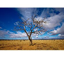 Portrait of a Tree - Steinfeld, South Australia Photographic Print