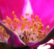 Inside The Rose by newfan