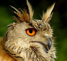 Eagle Owl by PhotoDream Art