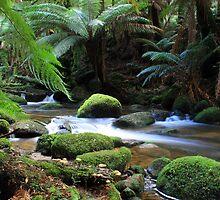 Tasmanian Rainforest creek by Matt  Harvey