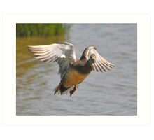 gadwall  I know you're looking Art Print