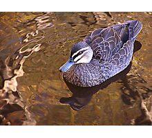 on golden lake Photographic Print