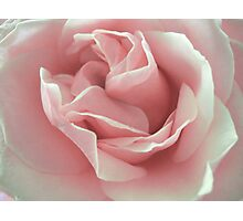 Pink Beauty. Photographic Print