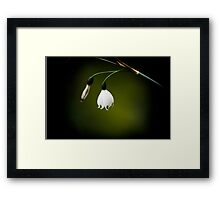 A tiny light in the darkness Framed Print
