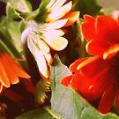 Spring Has Sprung Again by lizwaltzes
