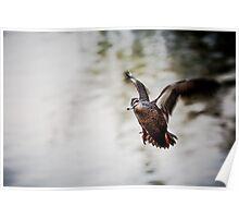 Duck ! Poster