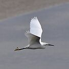 Egret by Russell Couch