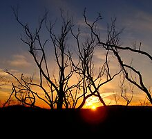 The remnants of Kinglake by Paige
