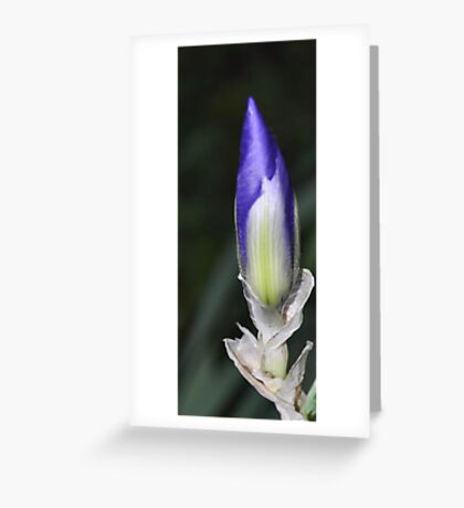 colored pencil Greeting Card