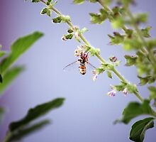 A pollinator at work by rickvohra