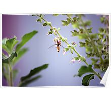 A pollinator at work Poster