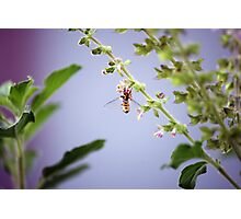 A pollinator at work Photographic Print