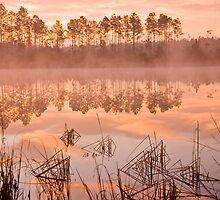 Louisiana Bayou at Dawn by wsteed04