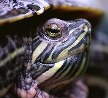 A wee turtle poking out by Al Williscroft