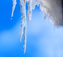 Icicles by igorsin