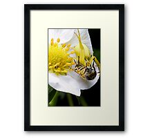 Yellow spider Framed Print