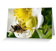 Yellow spider Greeting Card
