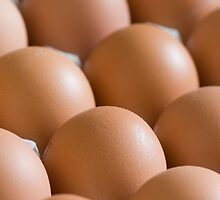 Eggs by igorsin