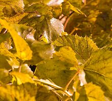 Yellow autumn leaves  by igorsin