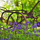 Bluebell Countryside by Michelle Lovegrove
