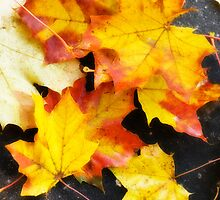 Autumn maple leaves by igorsin