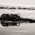 Resting between tides by clickinhistory