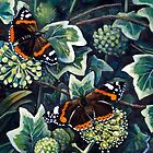 Autumn Red Admirals on Ivy flower. by Robert David Gellion