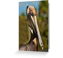 Breeding Adult Brown Pelican Greeting Card