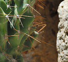 Cactus and stone by Igor Sinitsyn